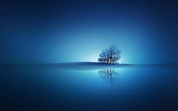 tree-with-deep-blue-background
